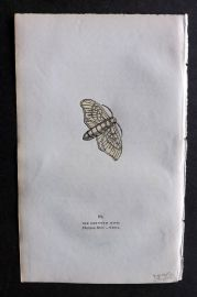 Captain Brown 1834 Antique Hand Col Moth Print. Silkorm Moth 89 China
